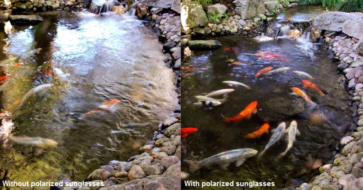 Polarized Sunglasses Work By  why are polarized sunglasses better for fishing sunglasses and